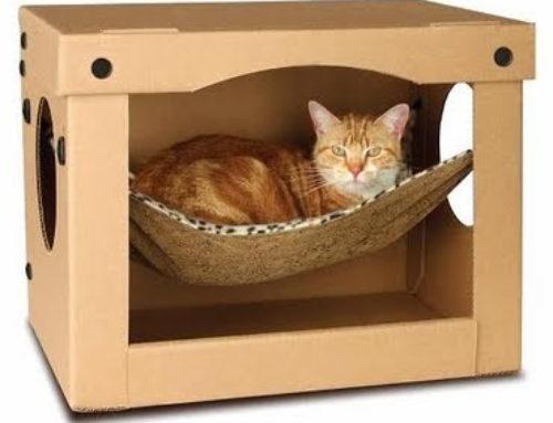 ¡Descubre cómo puedes hacer una cama para tu gato!