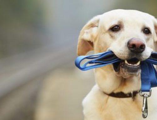 ¿Buscas una correa adecuada para tu perro?