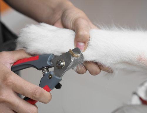 ¿Cuál es la mejor forma de cuidar las uñas de mi perro?