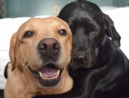 ¿Por qué debería tener más de una mascota en casa?